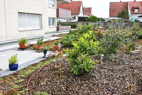 Gründach erstellt von Dachdeckerei C. Voegeli