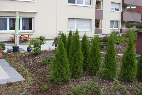 Bild einer Flachdachbegrünung erstellt von Dachdeckerei C. Voegeli GmbH